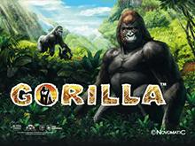 Gorilla - игровой автомат